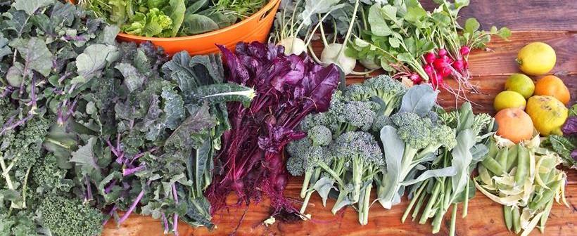 TG_Harvest_Brassica